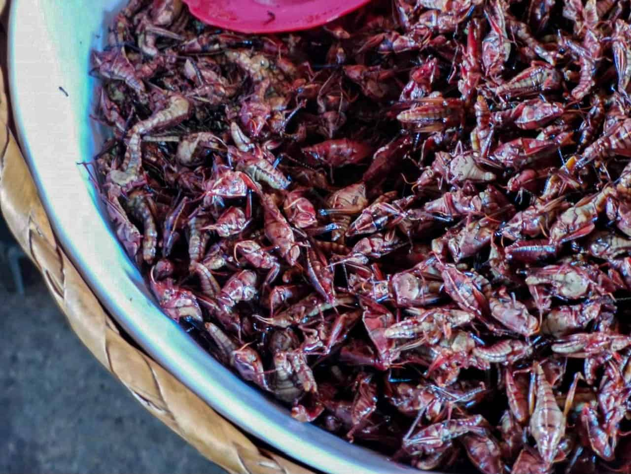 Best Mexico Food - Chapulines 2