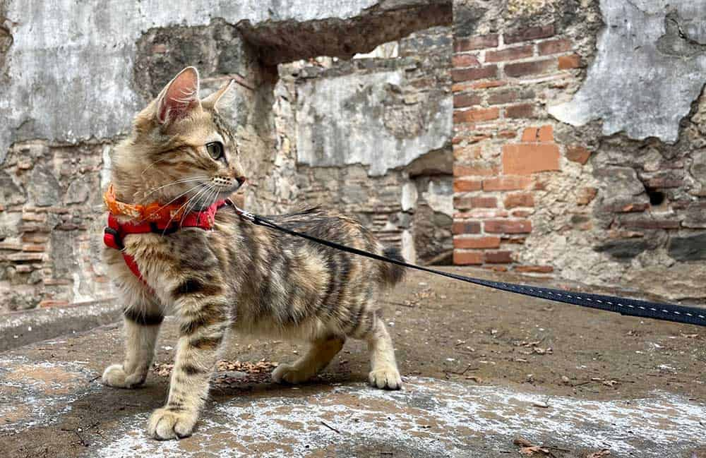 Our Cat (Maya) Visiting A Ruin In Antigua - Best Things To Do In Antigua